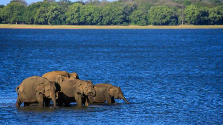 Tanks that are visited by Wild Elephants Herds | Gateway to East